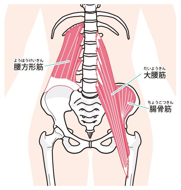 骨盤を支える筋肉
